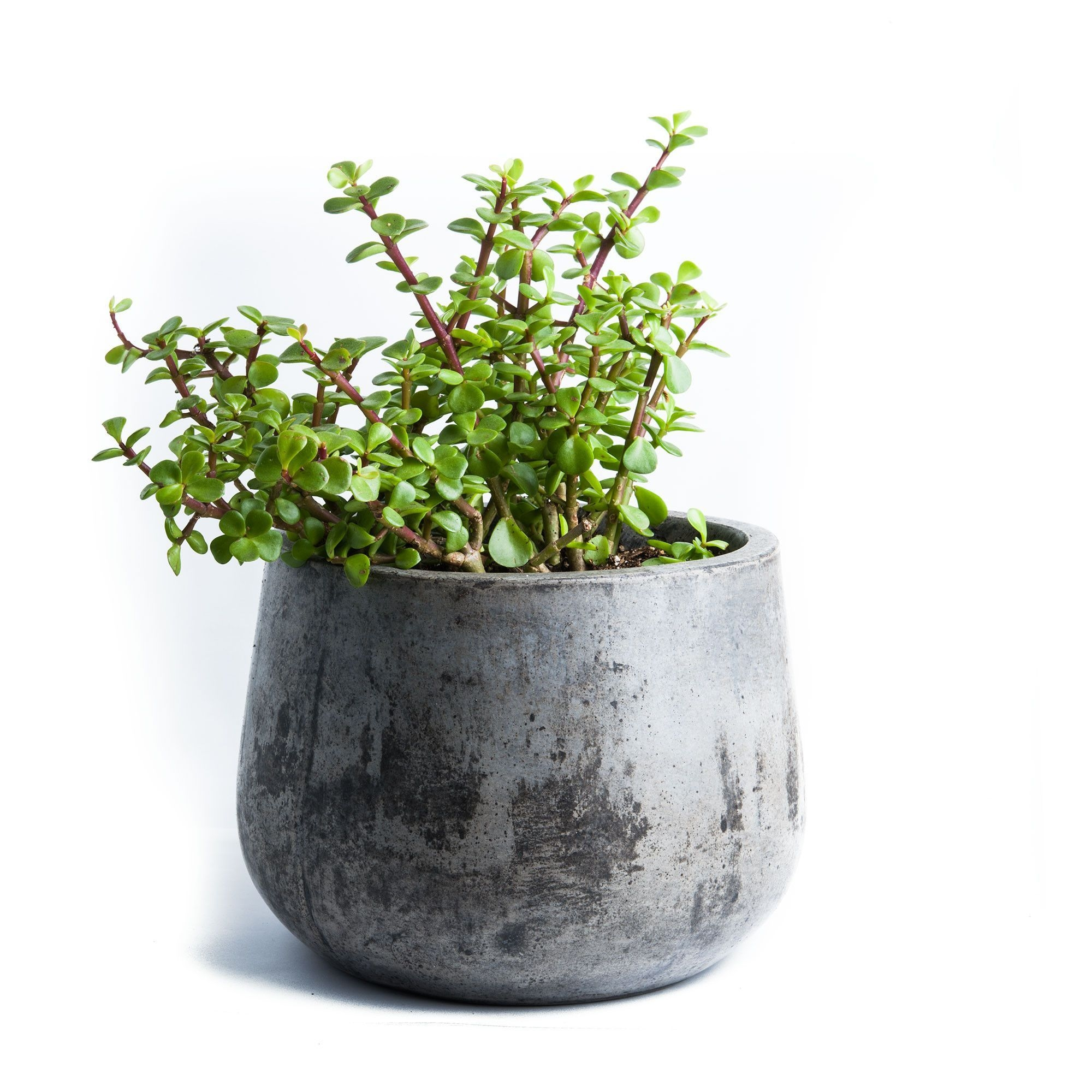 Sama is a simple Pod Shaped planter cast of cement and